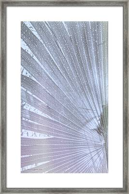 Palm Frond High Key Lh Framed Print