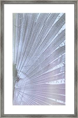 Palm Frond High Key Rh Framed Print