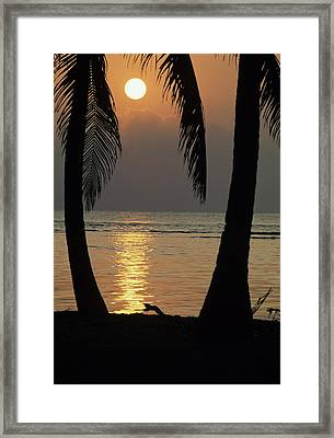 Palm Fronds And Sunset Over Caribbean Framed Print