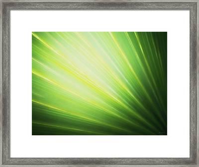 Palm Fronds Framed Print