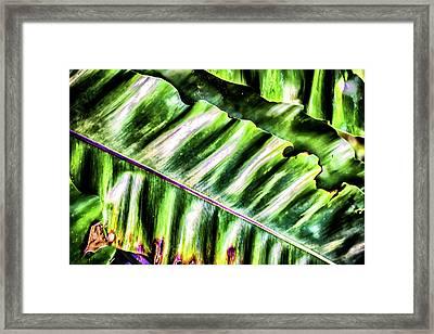 Palm Fronds Up Close Framed Print