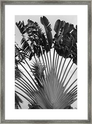 Palm Frons Framed Print by Rob Hans