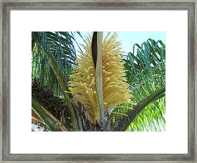 Palm In Bloom Framed Print by Evelyn Patrick
