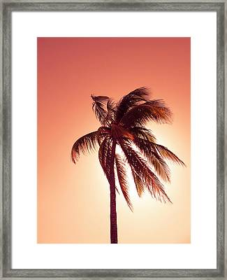 Palm In The Bay Of Pigs, Playa Coco, Cuba Framed Print