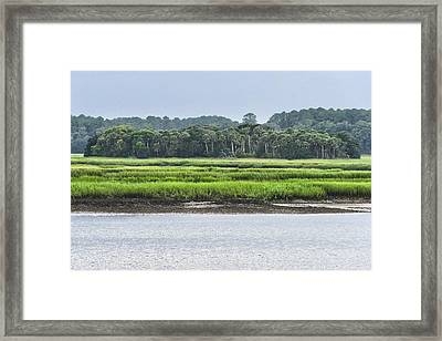 Palm Island Framed Print by Margaret Palmer