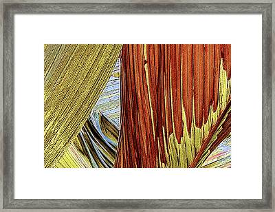 Framed Print featuring the photograph Palm Leaf Abstract by Ben and Raisa Gertsberg
