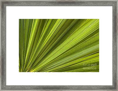Palm Leaf Abstract Framed Print by Elena Elisseeva