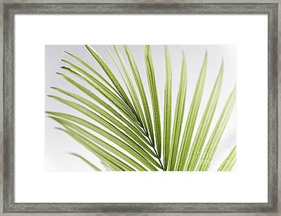 Palm Leaf Framed Print