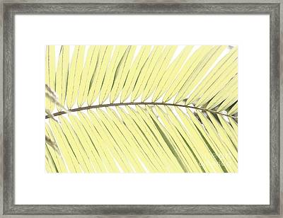 Palm Leaf Framed Print by Gaspar Avila