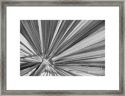 Palm Leaf In Black And White Framed Print