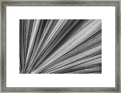 Palm Leaf Texture Framed Print