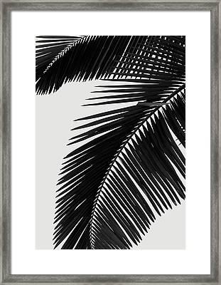 Palm Leaves Bw Framed Print