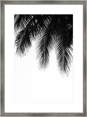 Palm Leaves Framed Print by Fine Arts