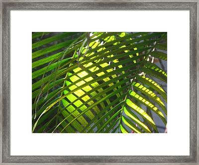 Palm Leaves In Sun Framed Print