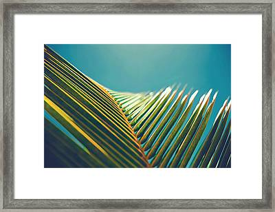 Palm Leaves In The Sun Framed Print