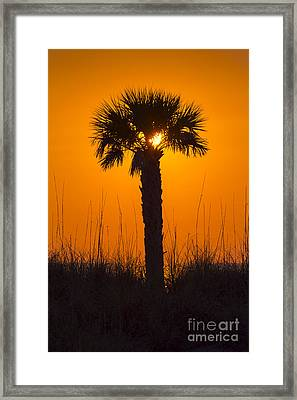Palm Light Framed Print by Marvin Spates