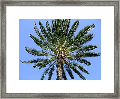 Palm Framed Print by Mindy Newman