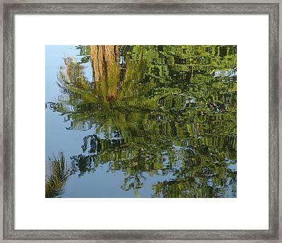 Palm Mirror Framed Print by Florene Welebny