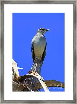 Palm Mocking Bird Framed Print by Deborah Benoit