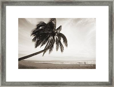 Palm Over Beach Framed Print by Ron Dahlquist - Printscapes