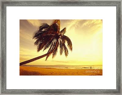 Palm Over The Beach Framed Print