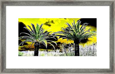 Palm Paradise   Framed Print by Will Borden