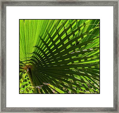 Framed Print featuring the photograph Palm Pattern No.1 by Mark Myhaver