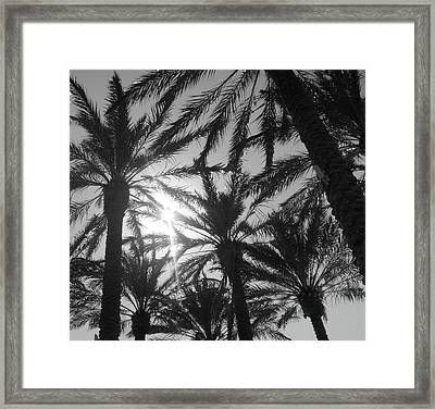 Palm Saturday Framed Print