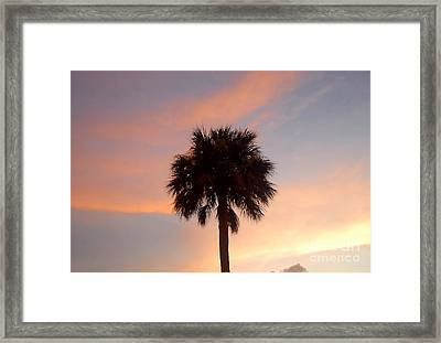 Palm Sky Framed Print by David Lee Thompson