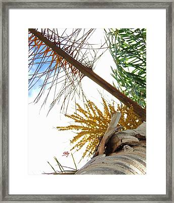 Framed Print featuring the photograph Palm Sky View by Linda Hollis
