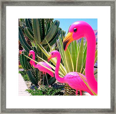 Palm Springs Flamingos 7 Framed Print by Randall Weidner