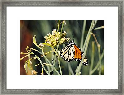 Framed Print featuring the photograph Palm Springs Monarch by Kyle Hanson