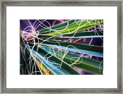 Palm Strings Framed Print by John Glass