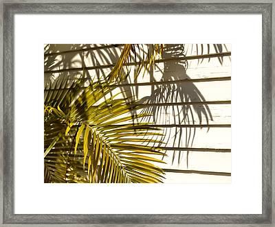 Palm Sunday Framed Print by JAMART Photography