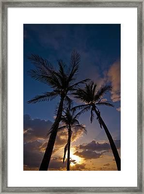 Palm Sunrise Framed Print