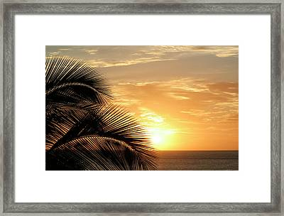 Palm Sunset 2 Framed Print