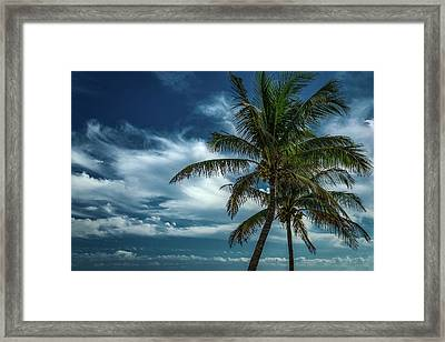 Palm Tree Against The Sky Framed Print