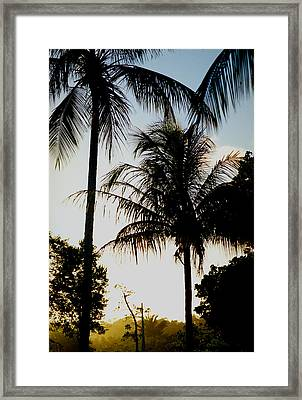 Palm Tree Framed Print by Amarildo Correa