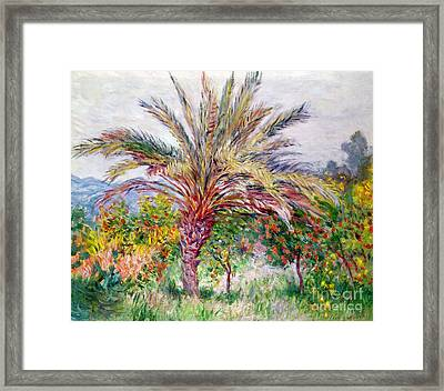 Palm Tree At Bordighera Framed Print by Claude Monet