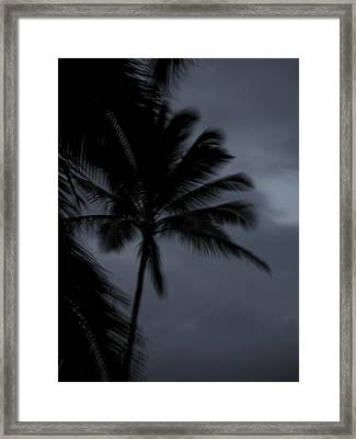 Palm Tree At Night Framed Print by Jonathan Hansen
