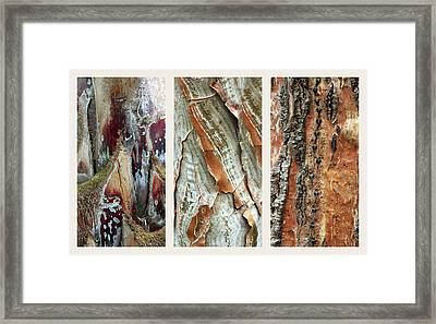 Palm Tree Bark Triptych Framed Print by Jessica Jenney