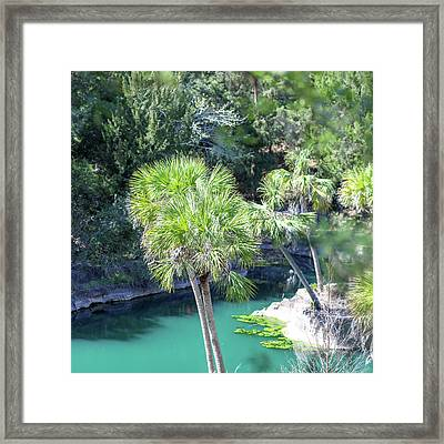 Framed Print featuring the photograph Palm Tree Blue Pond by Raphael Lopez