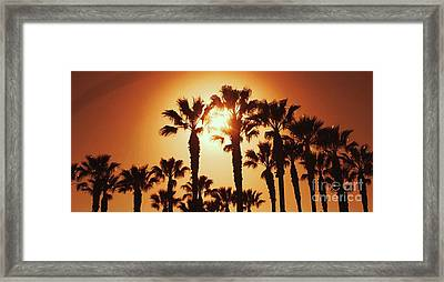 Palm Tree Dreams Framed Print
