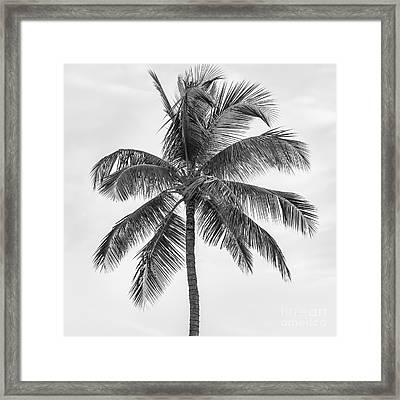 Palm Tree Framed Print by Elena Elisseeva