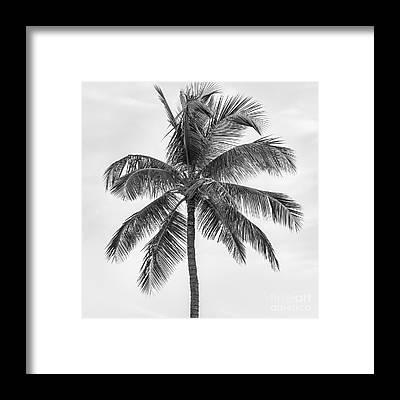 Palm Frond Framed Prints