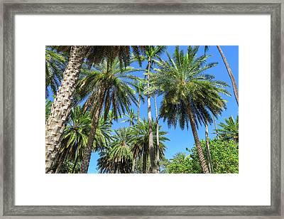 Palm Tree Forest Framed Print by Jera Sky