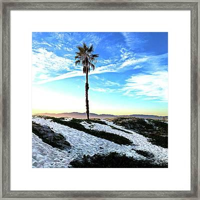 Palm Tree Framed Print by Howard Dando