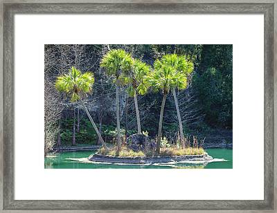 Framed Print featuring the photograph Palm Tree Island by Raphael Lopez