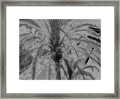 Palm Tree Framed Print by John Bradburn