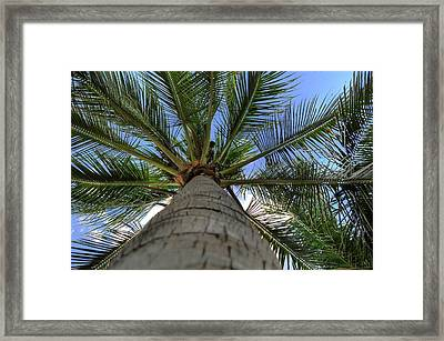 Palm Tree Framed Print by Kelly Wade